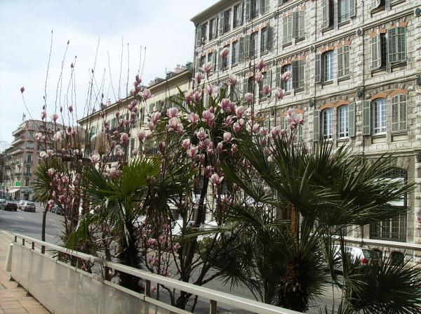 Magnolias et autres