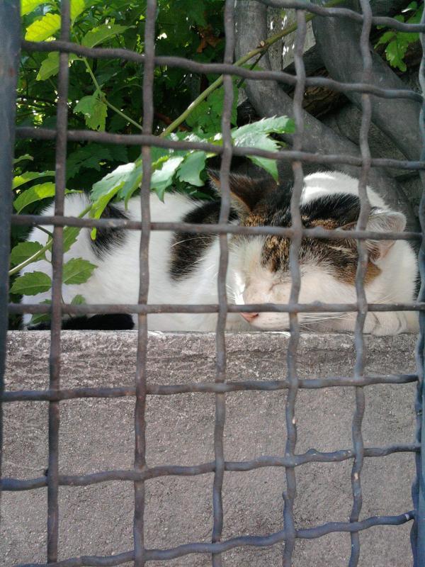 Le chat des voisins (2)