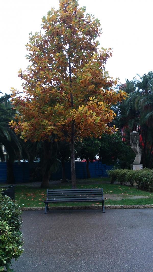 Novembre à Nice